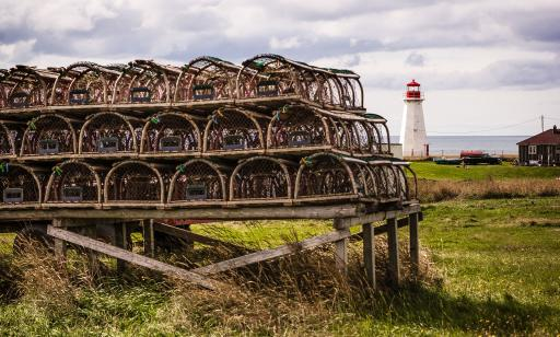 Lobster traps stacked in rows on a wooden structure. A lighthouse and the gulf can be seen in the background.