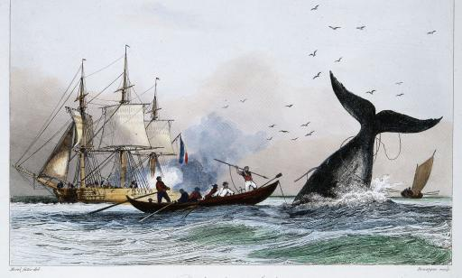 Six men in a whaling boat. One of them aims a harpoon tied to a cable at a sounding whale.