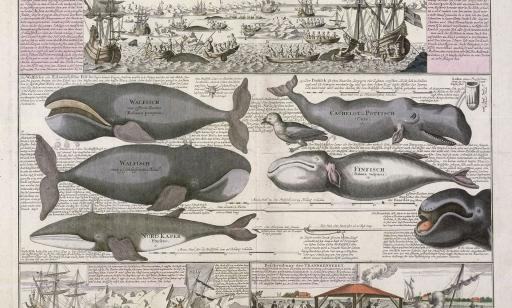 Document depicting various species of whale along with scenes showing whale hunting and how blubber was processed into oil.
